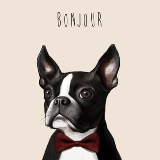 [May]Bonjour-Bulldog