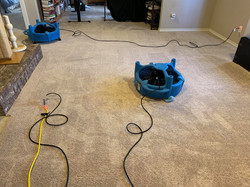 Drying carpet - after cleaning carpet