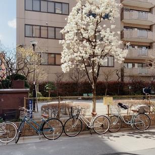 A moment in Tokyo: Taito City