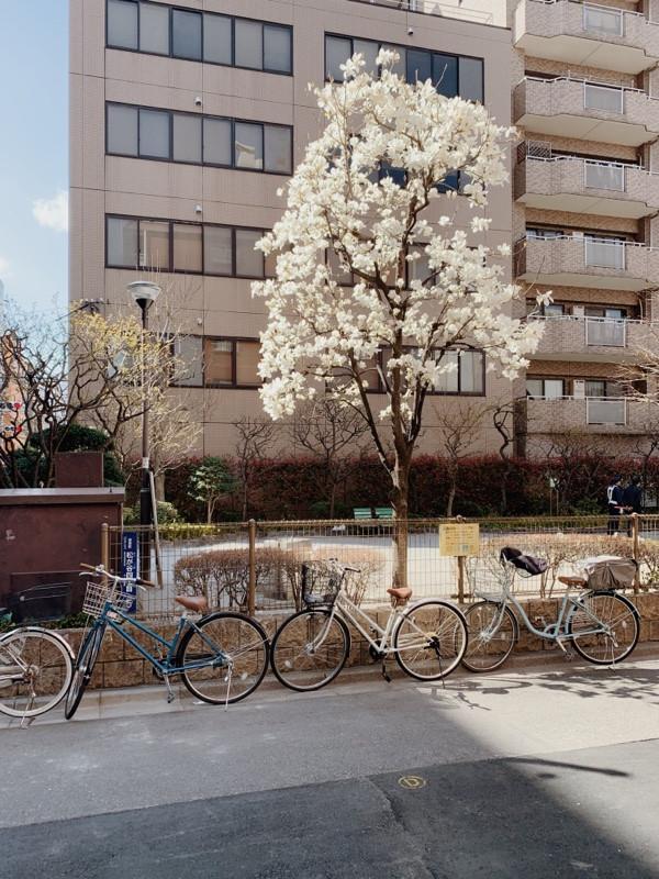Sun through magnolias