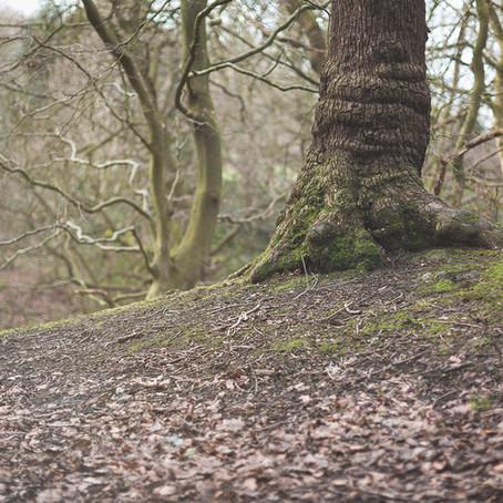 woodland wellbeing trail