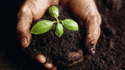 Which kind of soil are you?