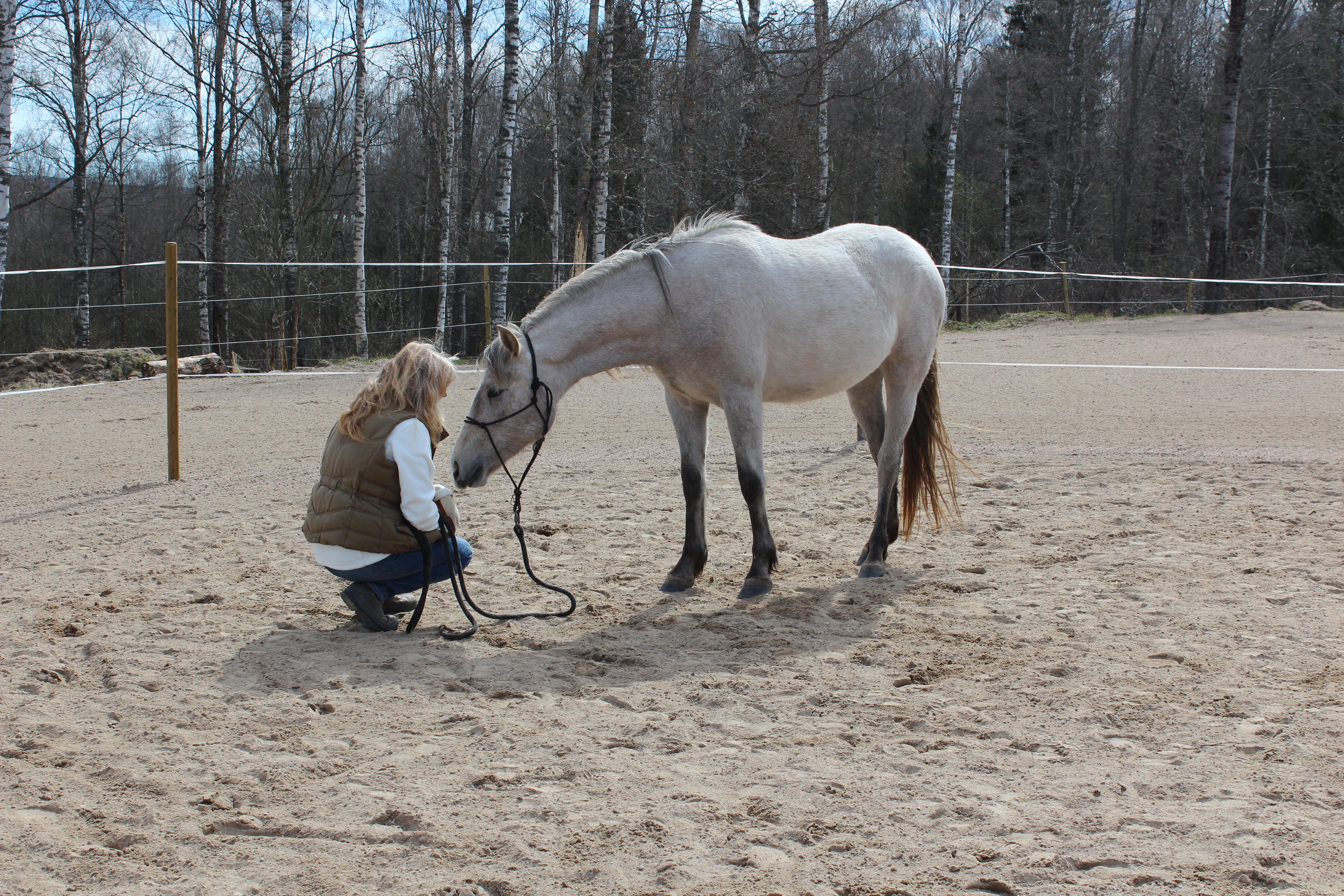 Kurs Hästmannaskap