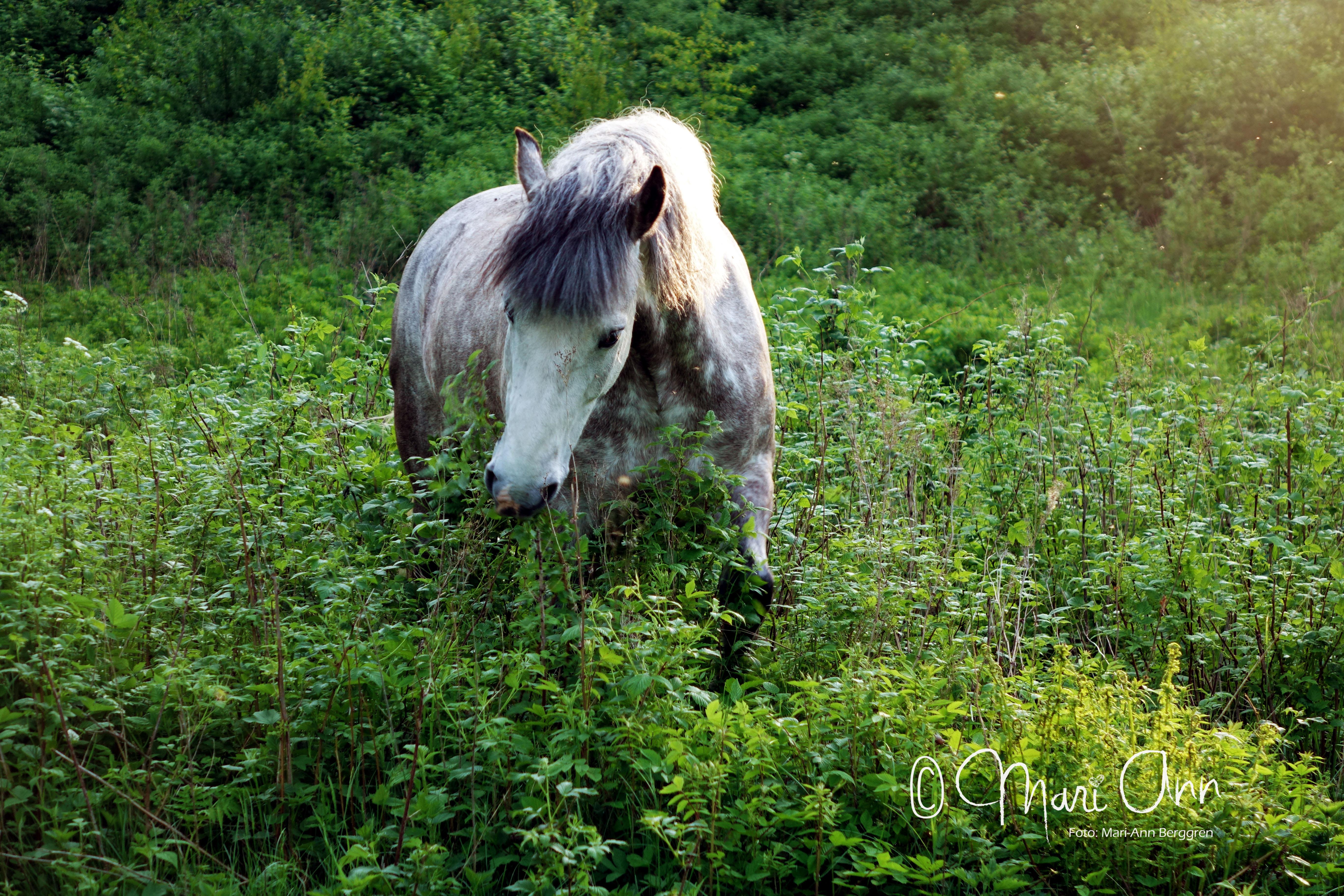 nicke_i_gräset