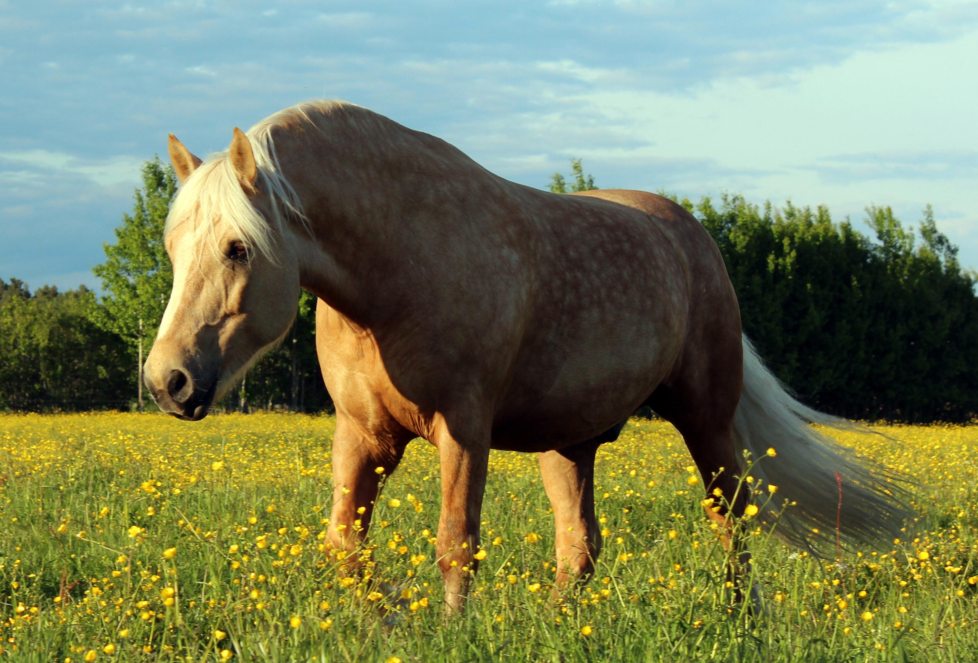 Isidor Dölhäst