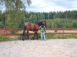 Perry Wood- en hästviskares hemligheter-