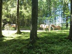 hästar 378