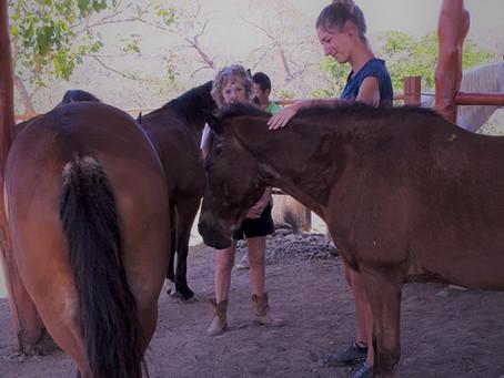 Die Wirkung von Pferden auf den Klienten aus der Sicht von Therapeuten und Klienten