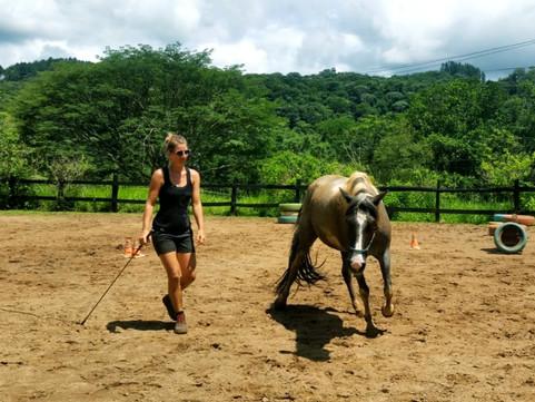 Natural Horsemanship Ausbildung