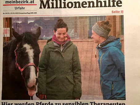 """Pferde werden als sensible Therapeuten eingesetzt"""