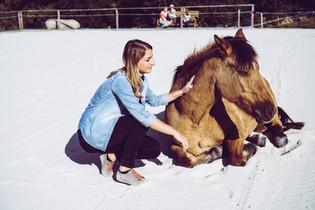 Pferde spüren