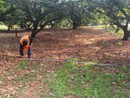 Riego de la Plantación