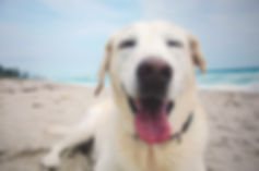 Coastal Animal Hospital Pet Wellness
