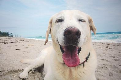 Coastal Animal Hospital Pet Wellness