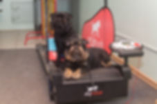 фотограф анималист челны, экстерьер, собак, клж велес, хендлинг зал, хендлер