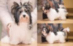 фотограф анималист челны, экстерьер, собак, клж велес, хендлинг зал,грумминг, хендлер