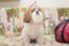 фотограф анималист челны, фотограф собак, экстерьер, собак, клж велес, грумминг