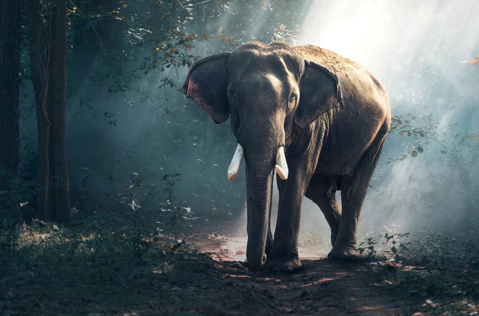 elephant-1822636_edited_edited.jpg