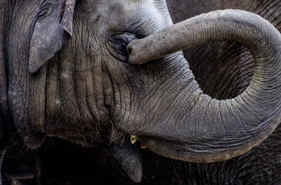 elephant-4791438_edited.jpg