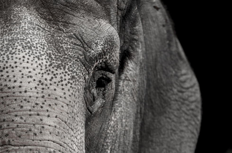 elephant-3728225_edited.jpg
