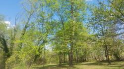 BNP SW Pod Riverbirch grove