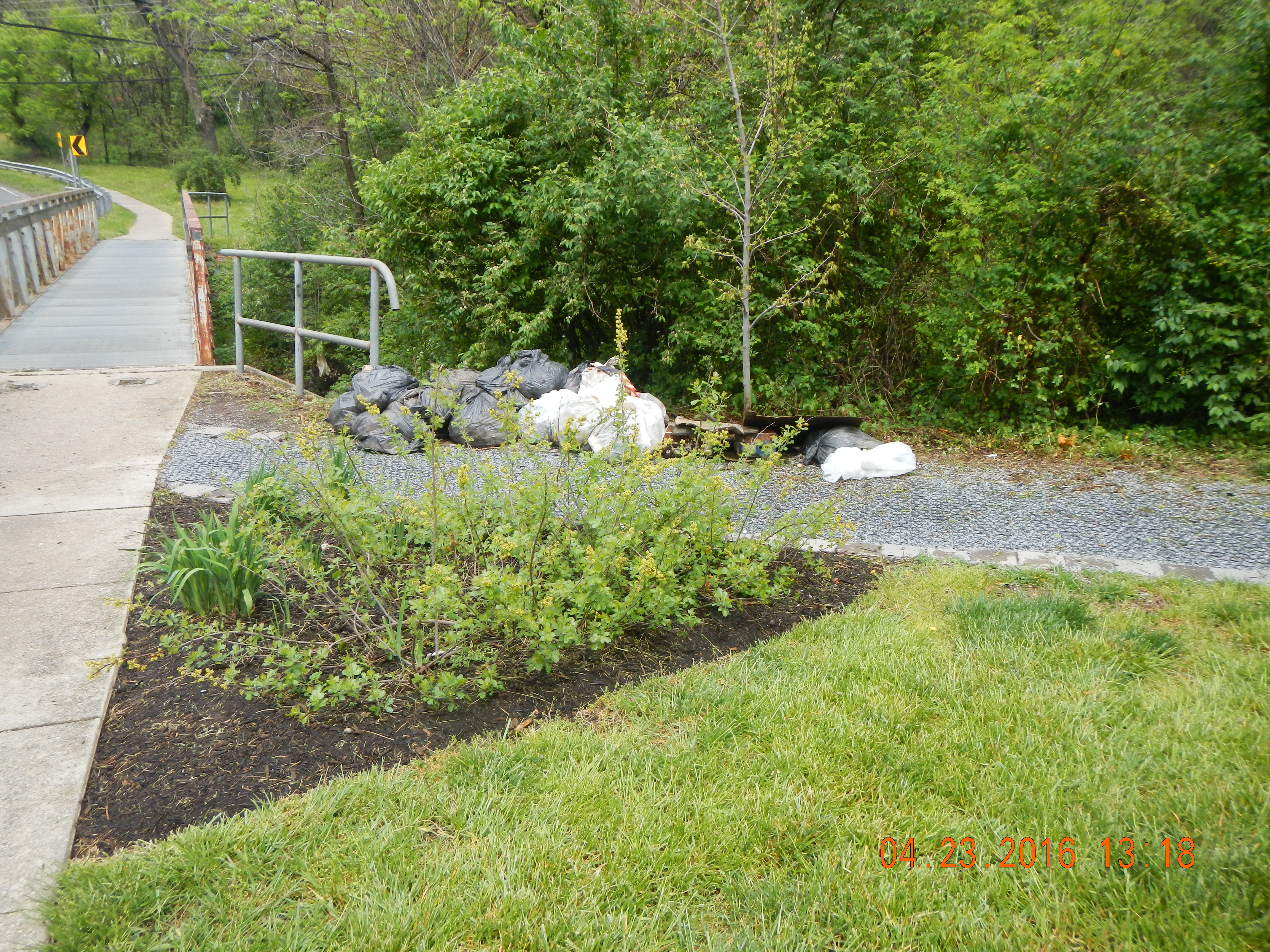 rain garden at foot bridge