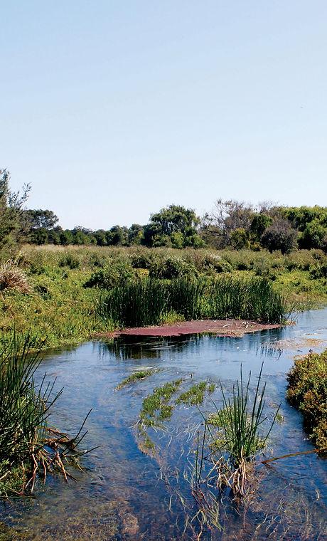 Darlots Creek at Tyrendarra IPA