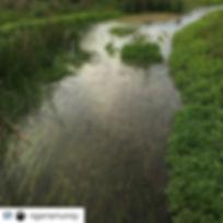 Darlot Creek