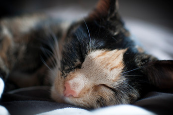 Sleeping Ramsey.jpg