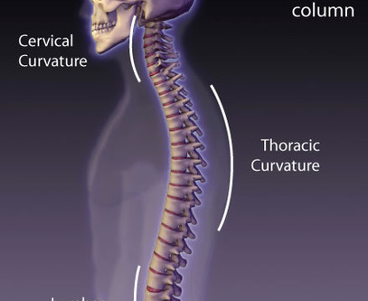 The Importance Of Spinal Curves