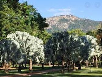 Palmetum #3.jpg