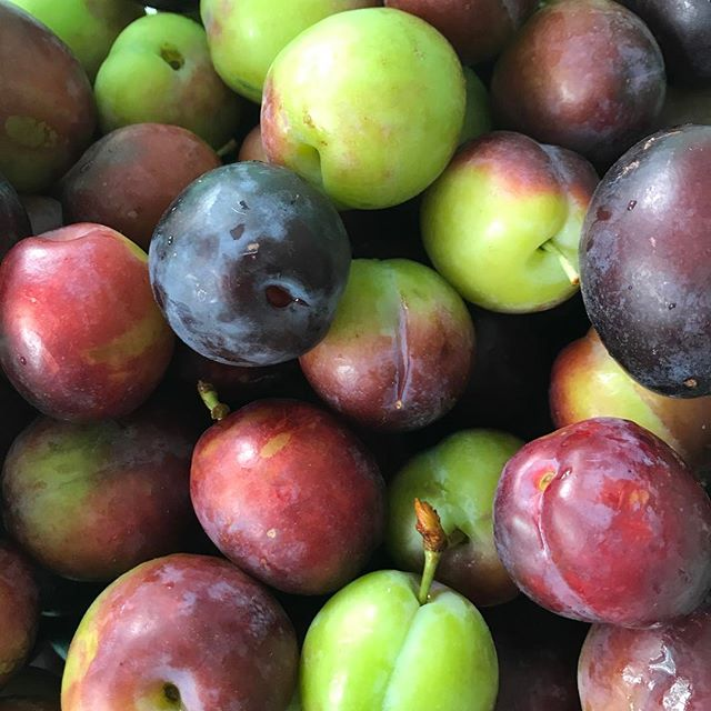 #plums #inseasonnow #local #liverpool #homegrown #bymyneighbour #lovethyneighbor #thankyou #youwantl