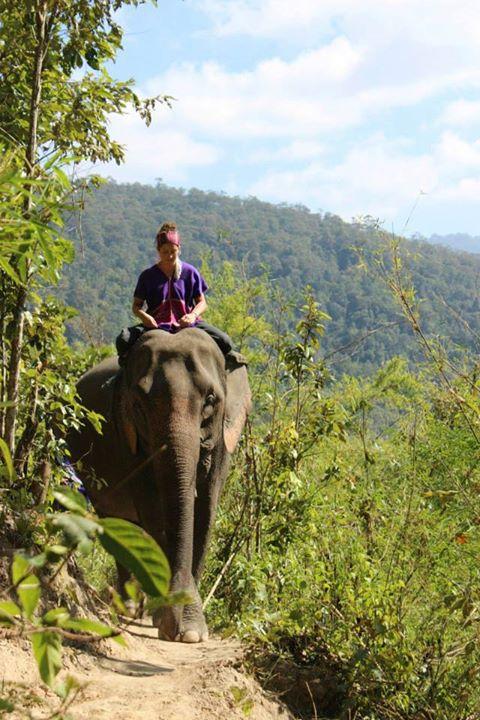 Elephant Discovery