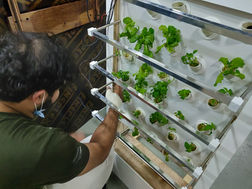 Smart Hydroponics with IoT features