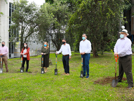 Campaña Plantación de árboles