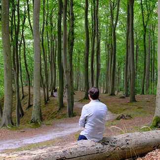 Getting back to nature: how forest bathing can make us feel better