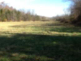 barn field 9.JPG