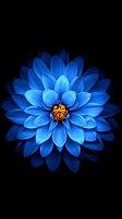 les top wallpaper iphone 6 fleur - Reche