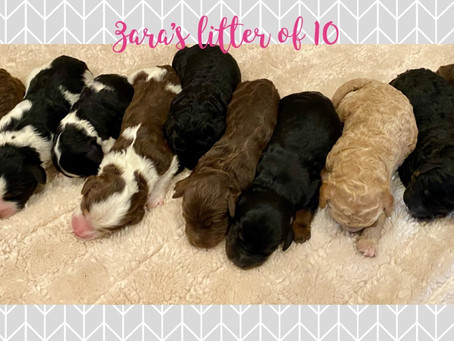 Available pups!!