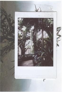 botanicher .jpg