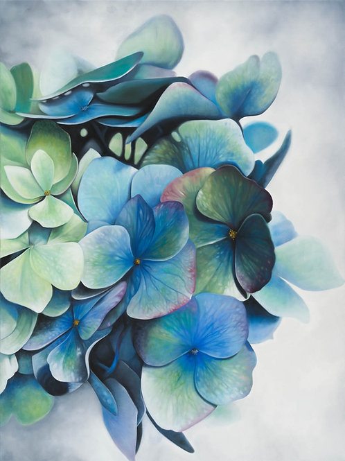 'Hydrangeas'