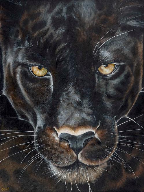 'Panther'
