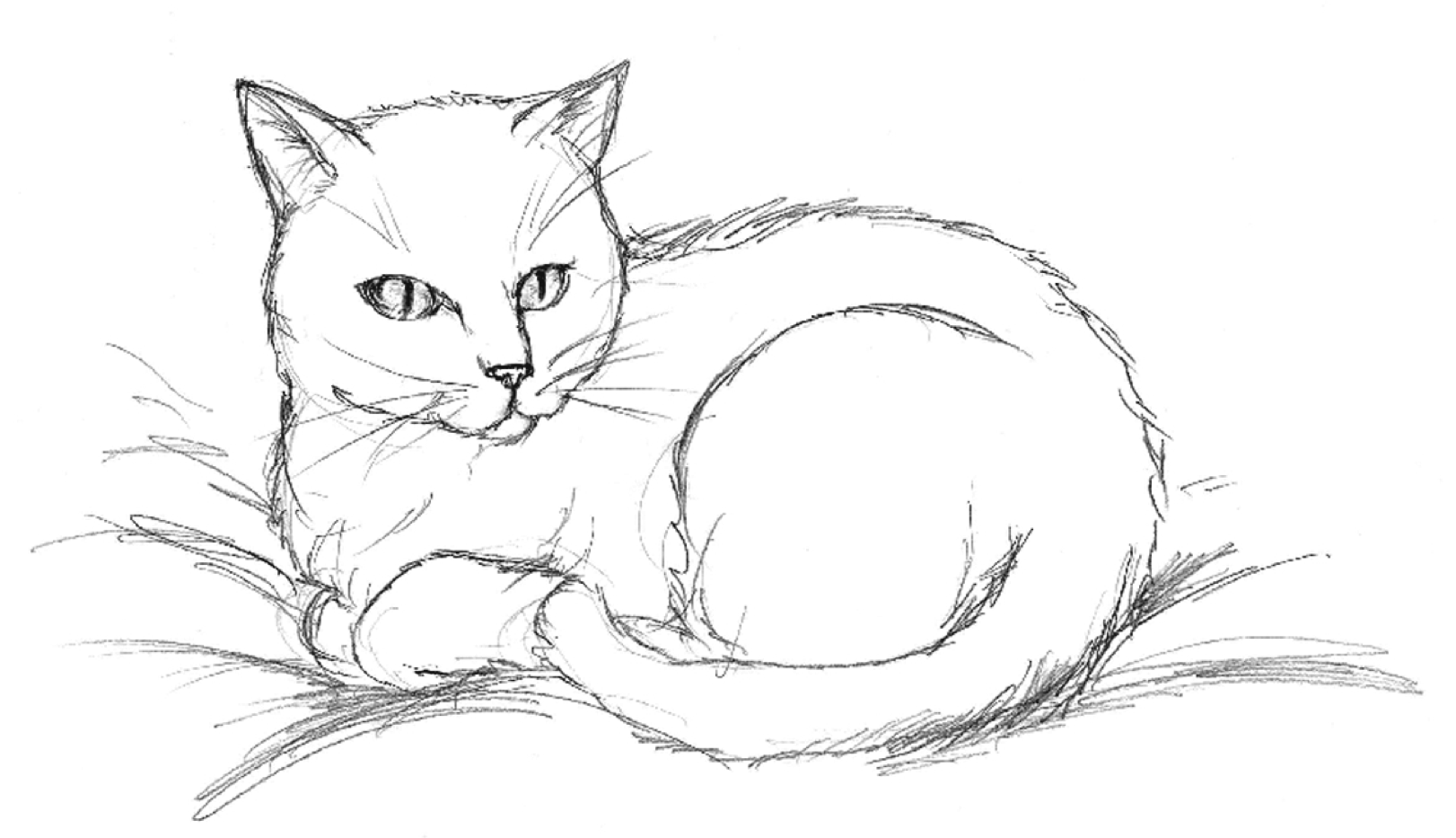 clay_img_cat_1.png