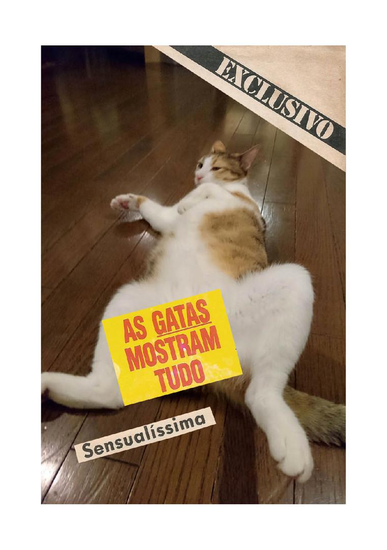 as gatas mostram tudo