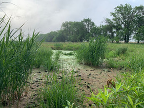 Mysterious Wetland Appears Near Beatrice