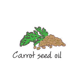 carrot seed oil.png