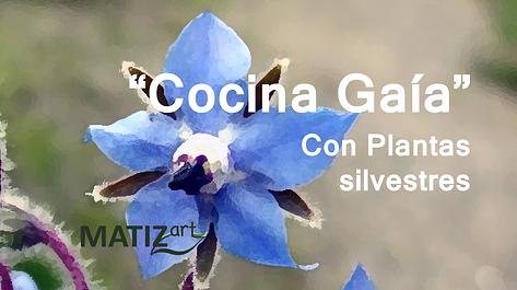 MATIZart Cocina Gaia.png