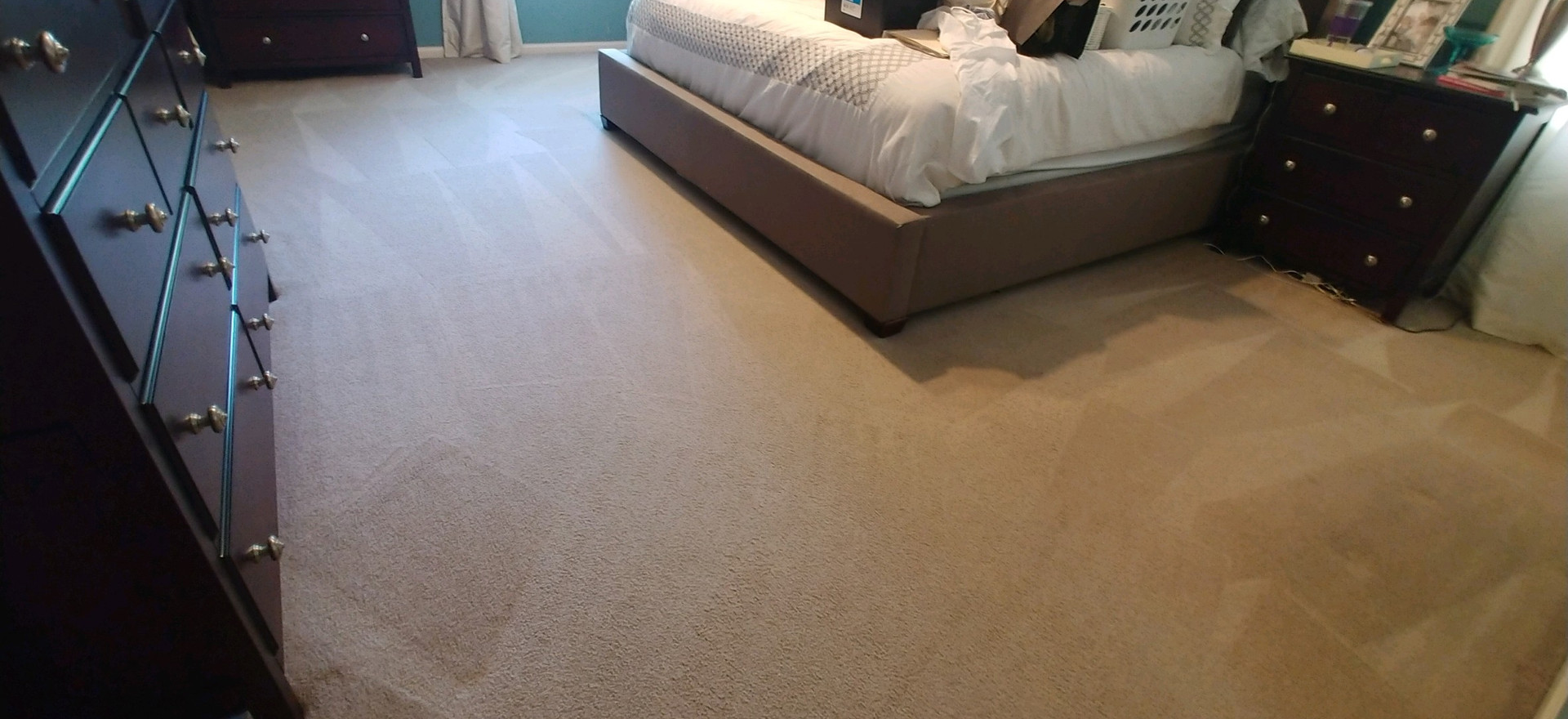 Pet Friendly Carpet Cleaning Services In West Bloomfield, MI