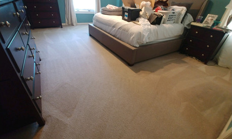 Pet Friendly Carpet Cleaning Services In Farmington Hills, MI