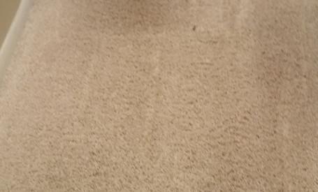 Carpet Cleaning in Brighton Michigan